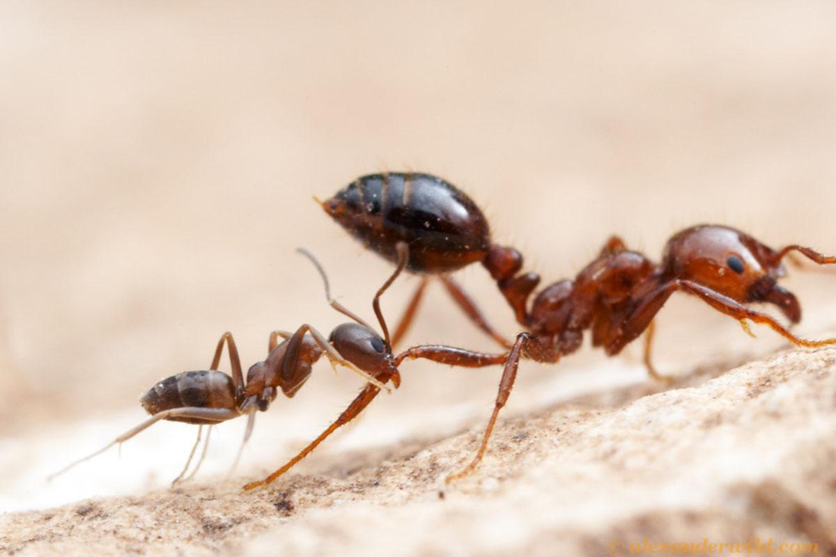 The Attack of Antz